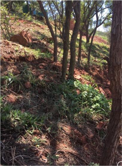 Landscapers in Gauteng, Centurio, Pretoria