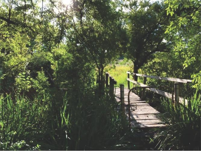 Landscaping_Centurion_ Gauteng4