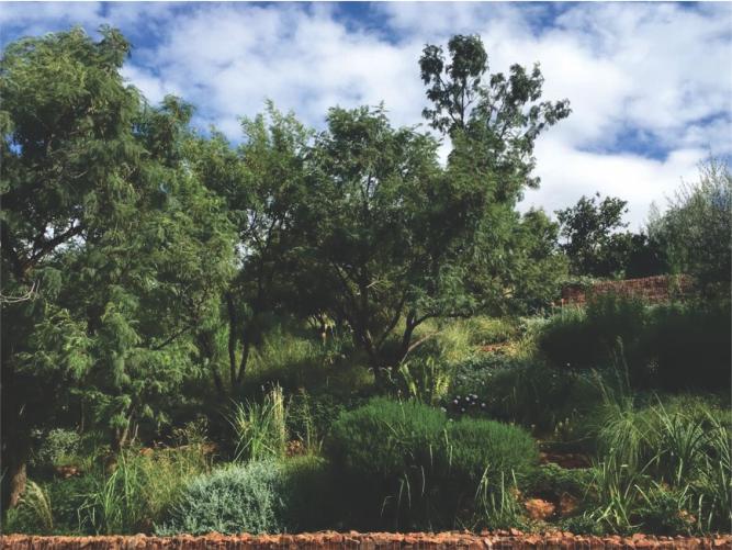 Landscaping_Centurion_ Gauteng8